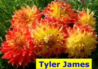 TylerJ