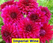Imperial Wine